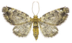 Clothes-moths-comn1-320x266.jpg
