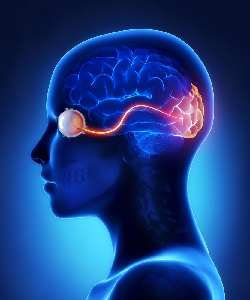 art, eye sight pathway to visual cortex - A Classic Review