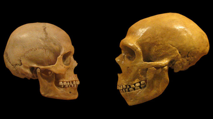 sapiens, neanderthal skulls - A Classic Review