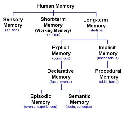 Human memory - graphic - A Classic Review