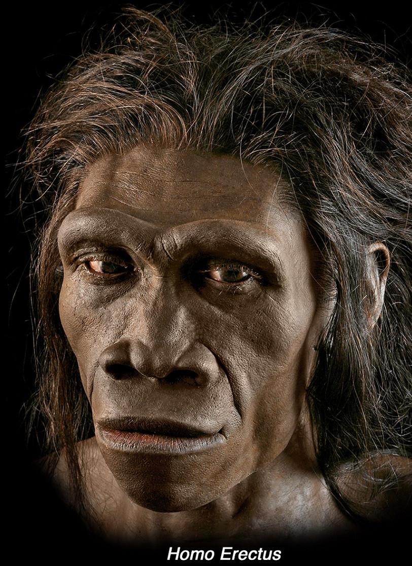 Homo erectus - A Classic Review
