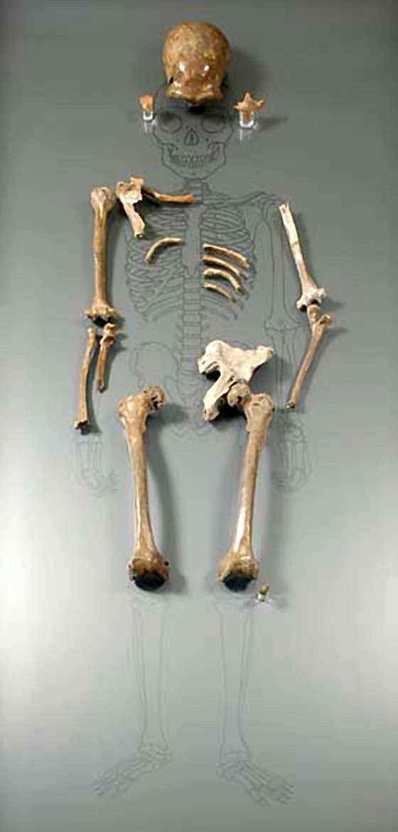 Neanderthal skeleton - A Classic Review