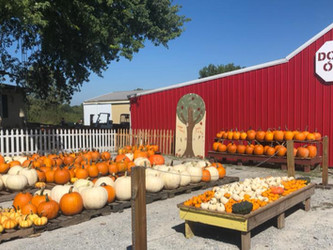 Five Ways To Use Pumpkins This Fall