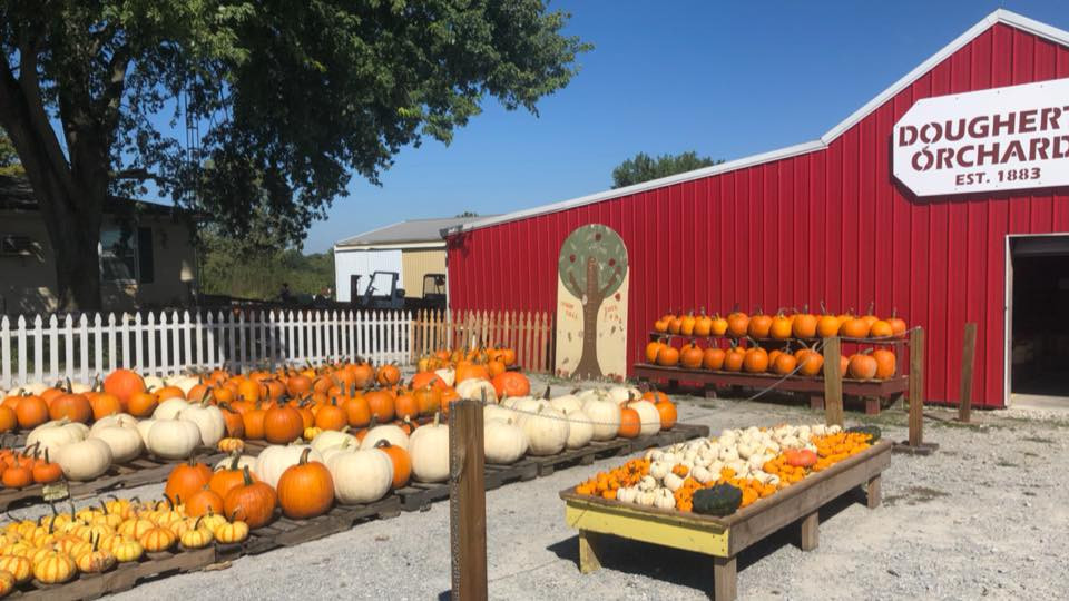 Pumpkins at Dougherty Orchards