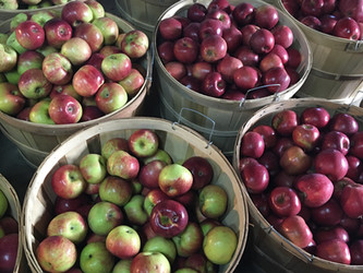 Dougherty Orchards Apple Chart