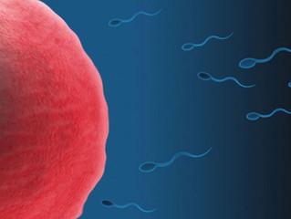 5 vezes em que a ciência assegurou que a vida começa na fecundação