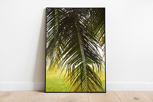 Palm Trees II Print