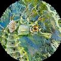seahorse cropped.jpg.png