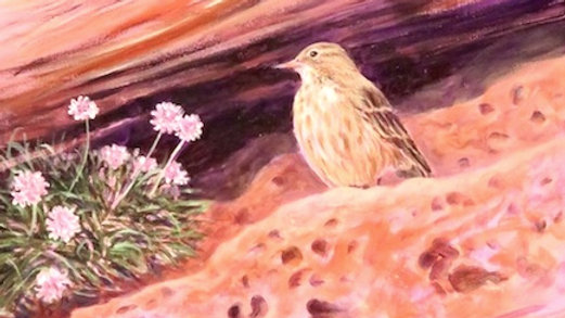 Rock Pipit at St Bees