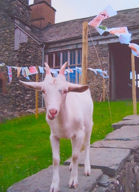 A visitor to Coniston Water Festival