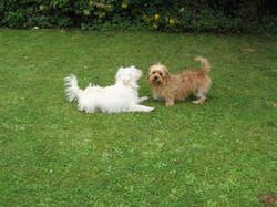 Tilly & Rosie