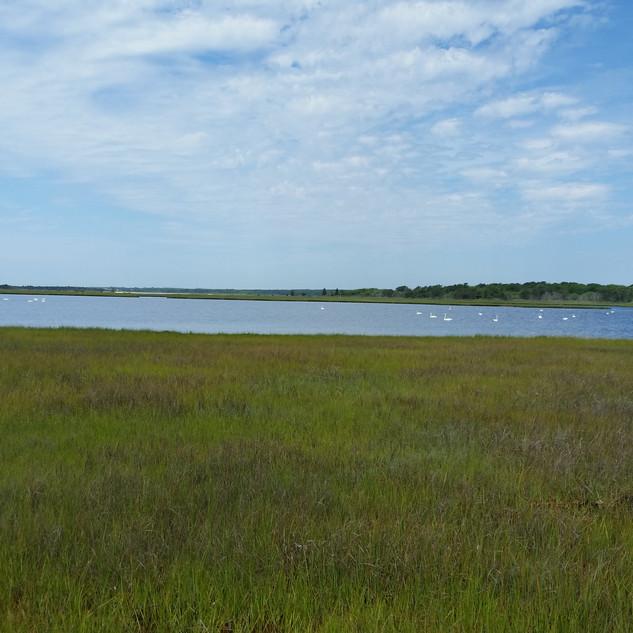 Sage Lot Pond, MA, USA