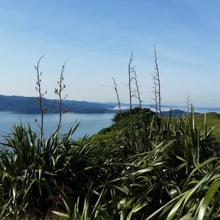 Awhitu, New Zealand