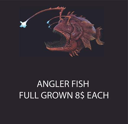 ANGLER FISH(Pc Small)