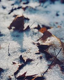 SnowKissedLeaves.jpg