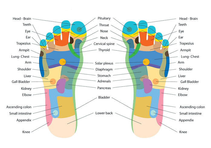 foot-reflexology-chart-vector.png