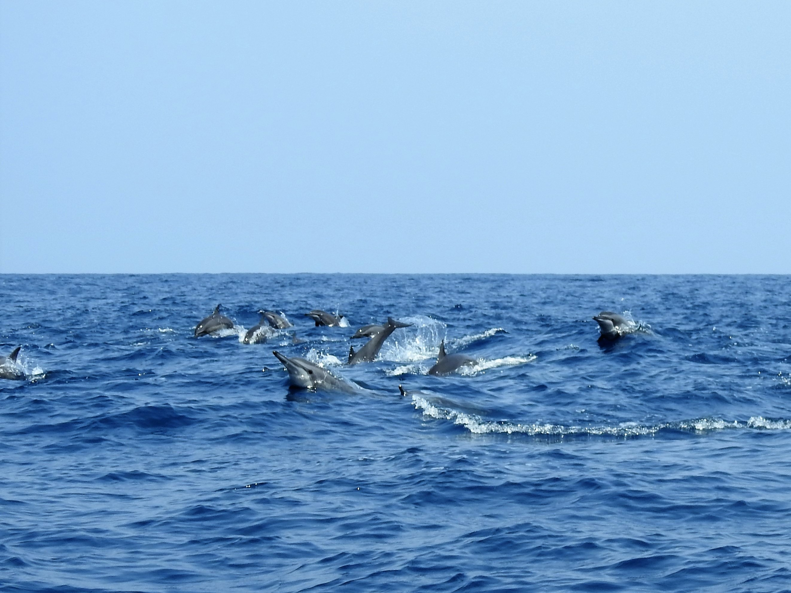 Be amazed by the number of dolphins