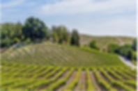 Local Winery.jpg