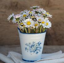 daisy-pointed-flower-flower-white-99565.