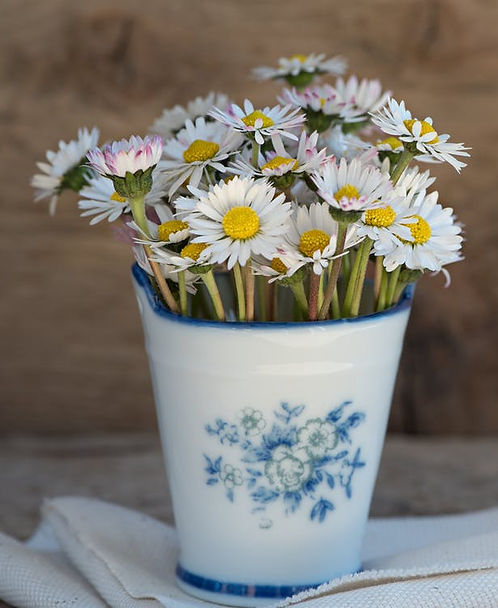 daisy-pointed-flower-flower-white-99565.