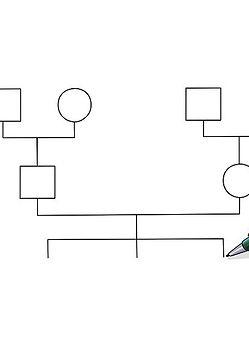 v4-728px-Make-a-Genogram-Step-11.jpg