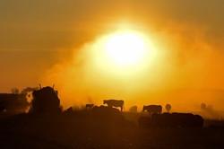 Morning Dust