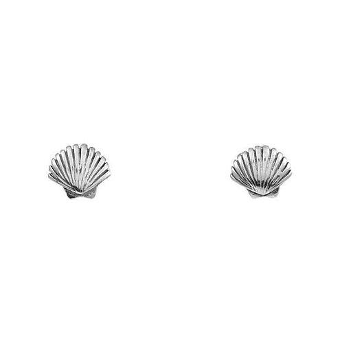 Midsummer Star   Dainty Seashell Studs