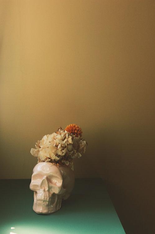 Crâne José