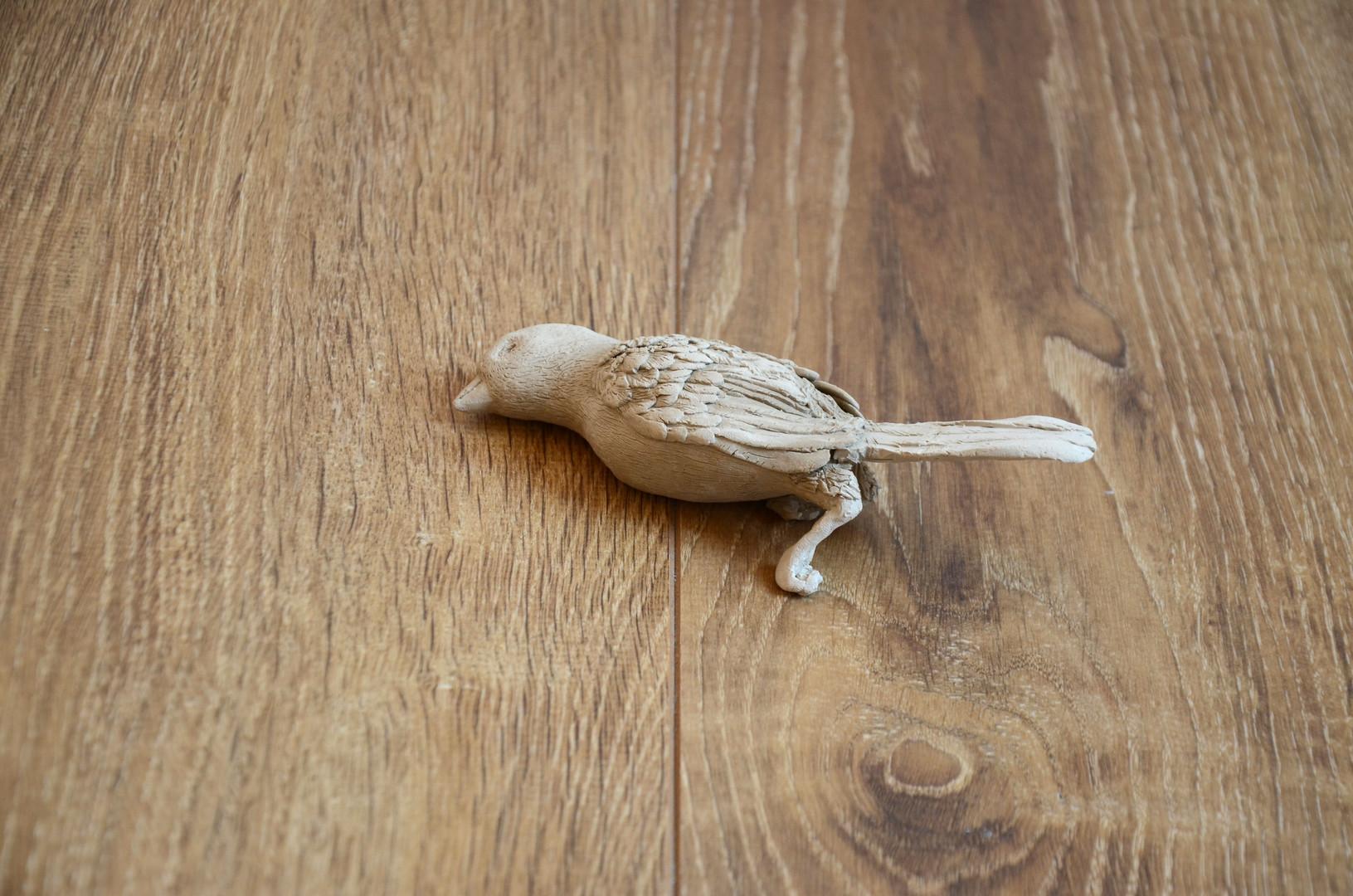 Est-ce que les oiseaux se cachent pour m