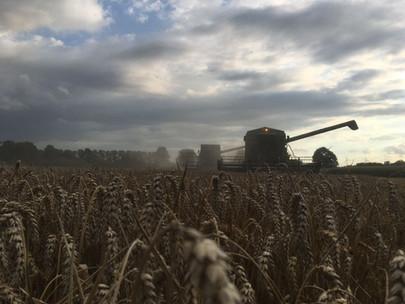 Mähdrescher Weizen