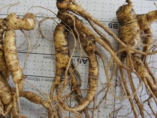 450 корней дикорастущего женьшеня на сумму более 9 миллионов рублей изъяла таможня в сентябре