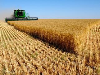Китай готов рассмотреть расширение поставок зерна из РФ