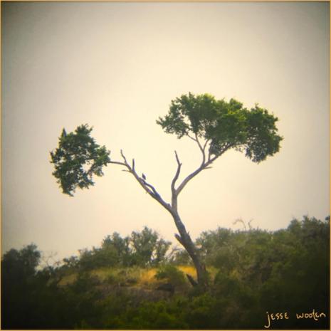 Jesse Wooten - Turkey Vulture (2020)