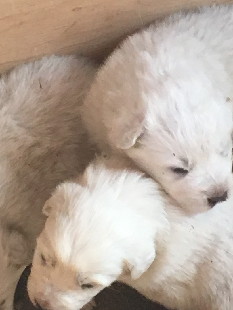 Puppys (7).JPG