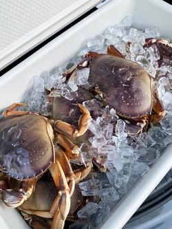 Crabs! Crabs!! Crabs!!