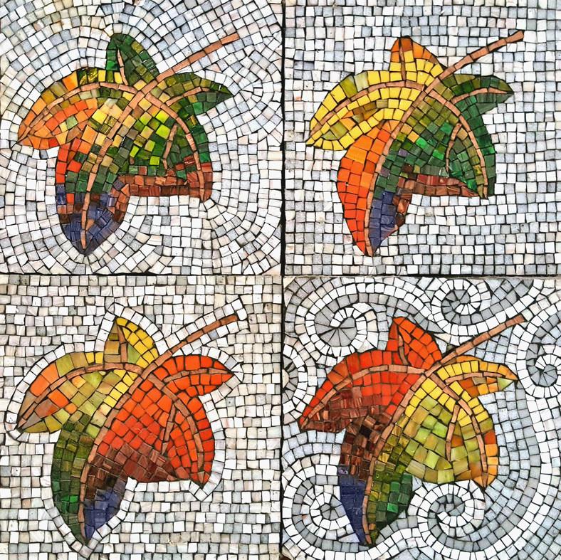 Leaf -background study