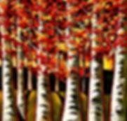 Sergey Cherep Trees.jpg