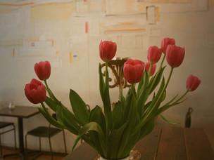 minimalist, conceptual colour blooms