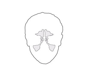 sinusitis logo.jpg