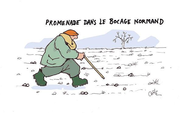 bocage-normand.jpg