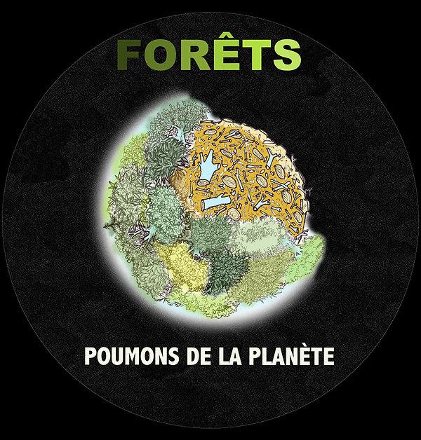 Planète Terre dépouillée de ses forêts, dessin couleur et texte