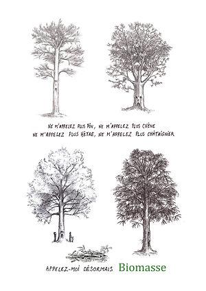 Pin, chêne, hêtre, châtaignier, biomasse, avec texte, dessin artistique noir et blanc