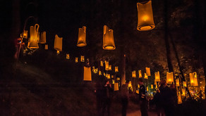 Review: Fire Gardens at the Adelaide Botanic Gardens