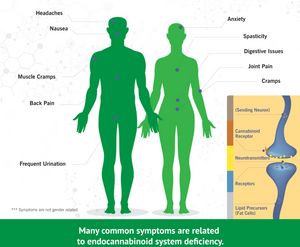 Expression of the enndocannabinoid system (ECS) throughout the human body.