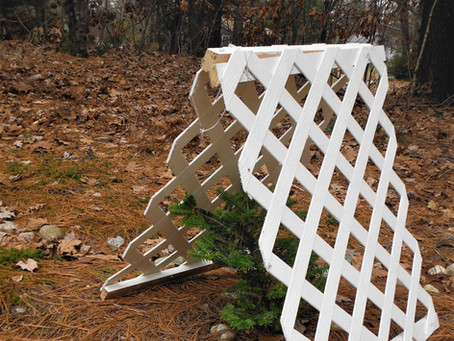 How to protect your shrubs and evergreens from damaging winter snows