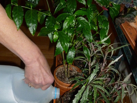 Indoor plant care during the winter months