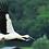 Thumbnail: 兵庫県産鴻鳥米 2kg (有機無農薬特別栽培米)
