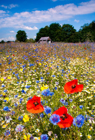 The Bishops' Meadow - a community meadow in Nettleham, Lincolnshire