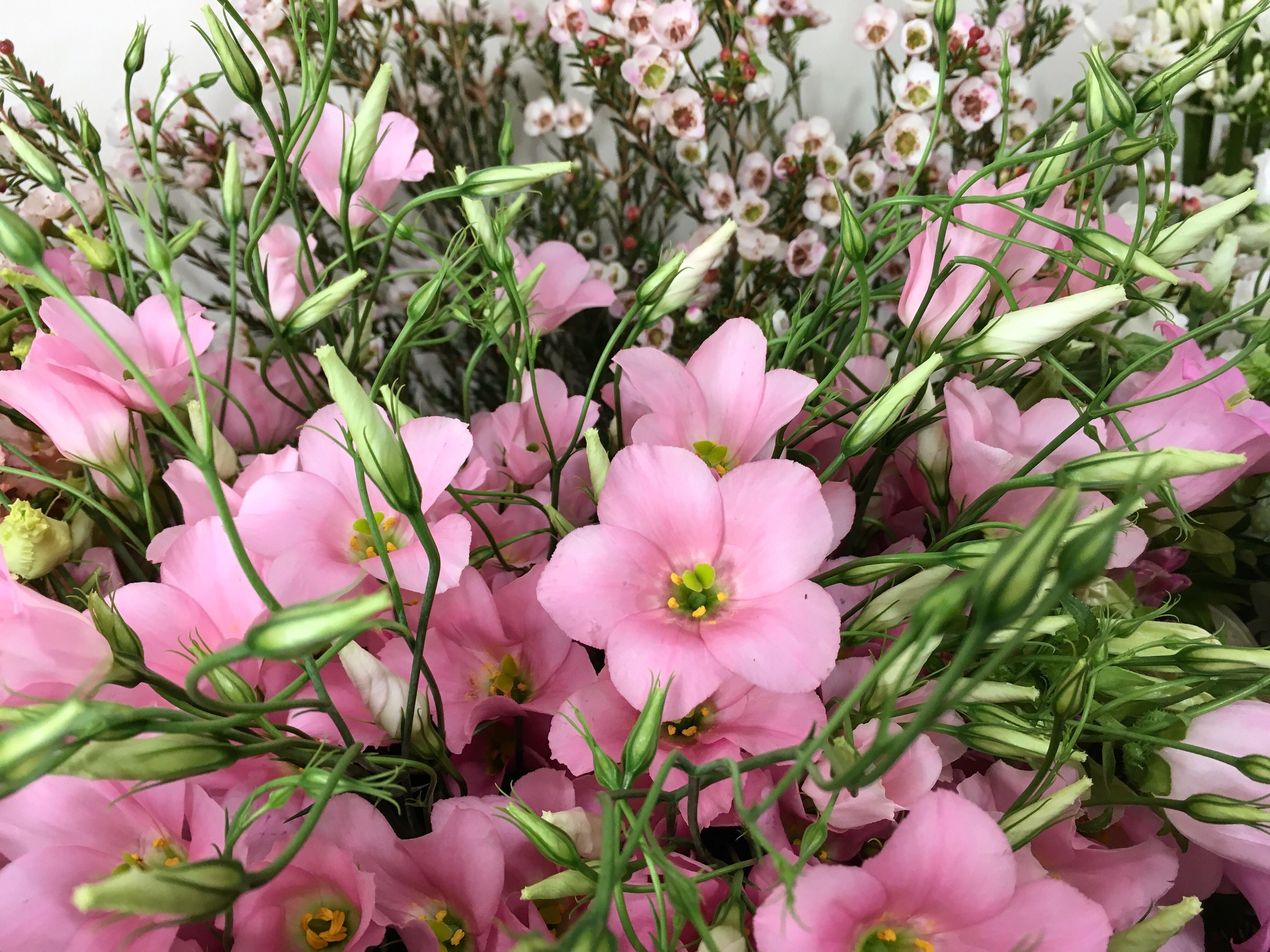 Lisianthus et wax Marlies Fleurs fleuriste Nimes
