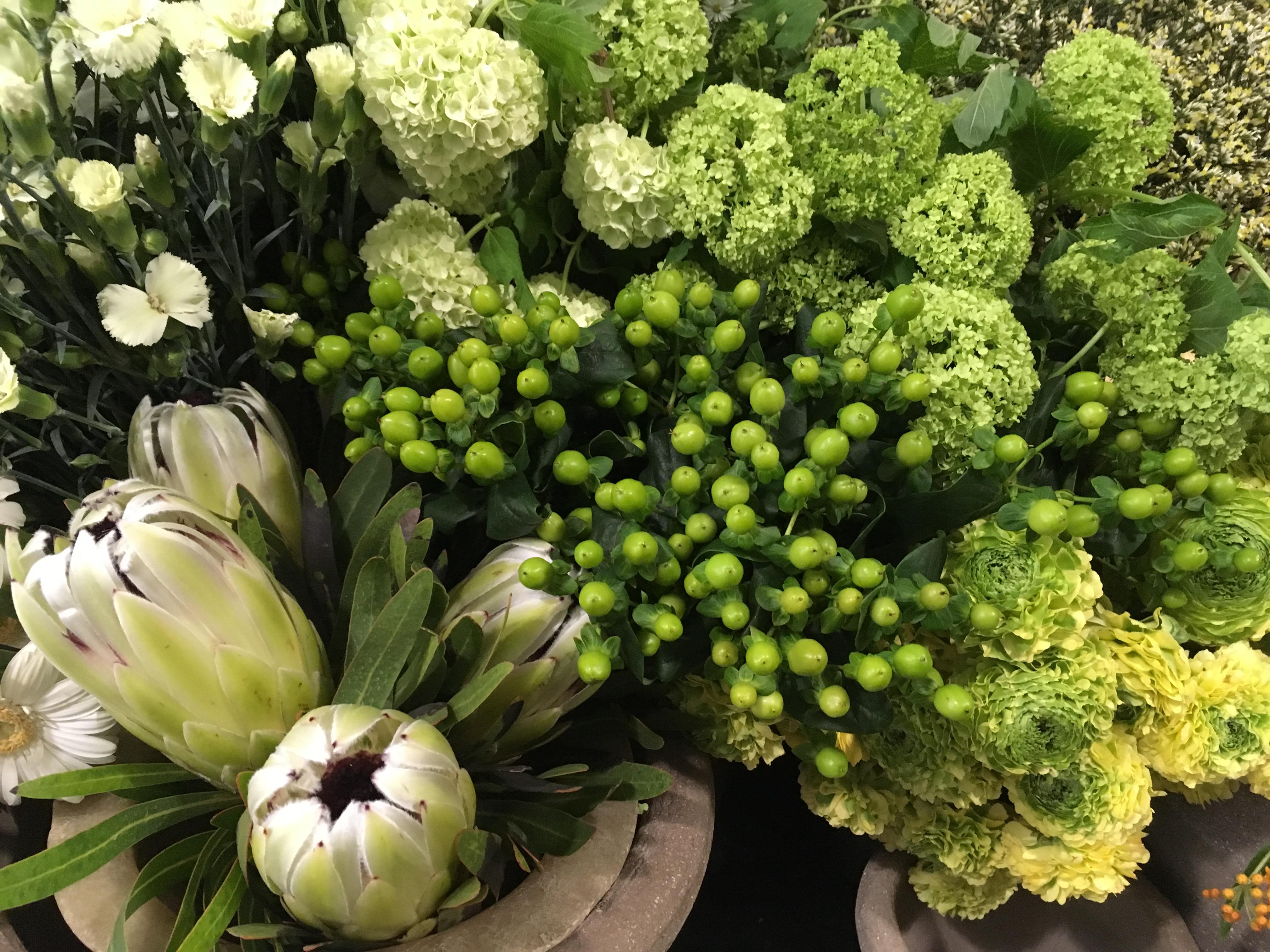 Hypericum protea viburnum Marlies Fleurs fleuriste Nimes